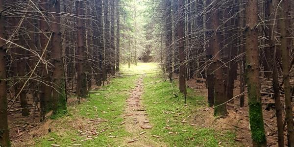 Unterwegs in den Woringer Wäldern