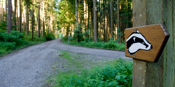 Wegemarkierung Walderlebnispfad