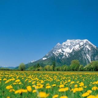 Blumenwiese in Trautenfels mit Grimming im Hintergrund