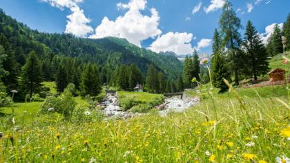 Estate-Tour Val Genova-Località Ragada-Foto Bisti