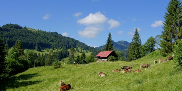 Die Bilderbuchlandschaft beginnt schon nach kurzer Zeit an der Alpe Vorderschönebuch
