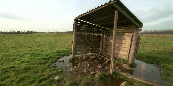 Auen-Idylle: Wer im Nemdener Bruch den Weg verlässt, riskiert in jedem Fall nasse Füße
