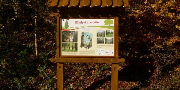 Élőhelyek az erdőben