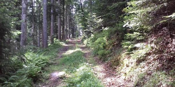 Abstieg in Kleinenztal