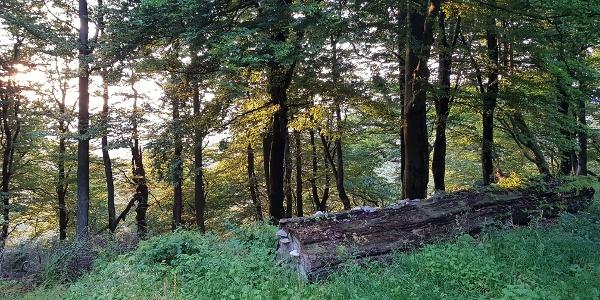 Der Medebacher Bergweg kurz vor Küstelberg.