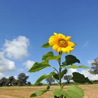 Sonne und Natur genießen
