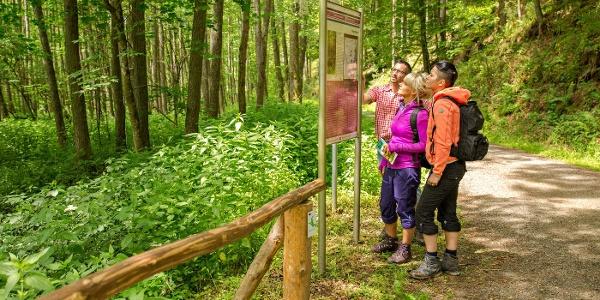 Informationsportal Eichelsbachermühle