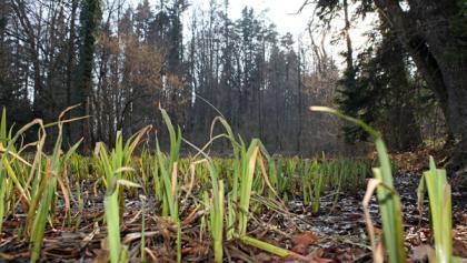 Chlosterwald Moor
