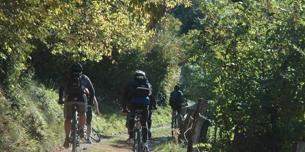 Biker auf dem Waldweg