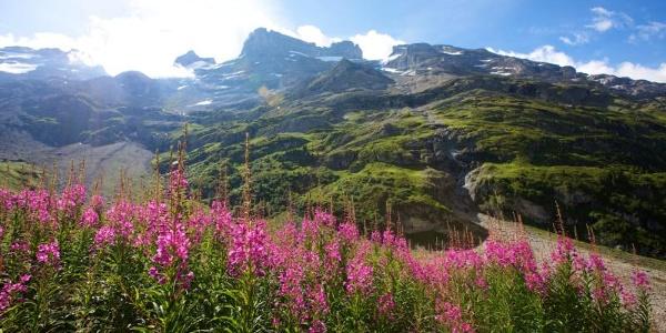 Blumenwiese am Jochpass