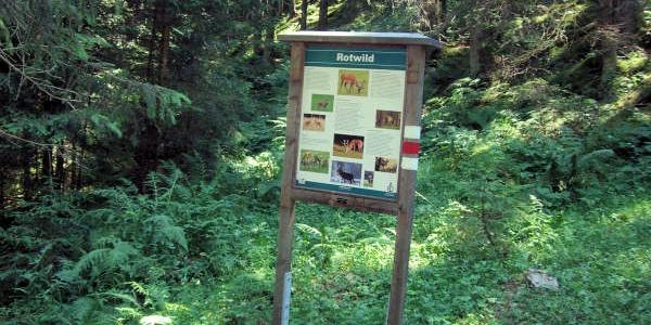Informationstafel Rotwil