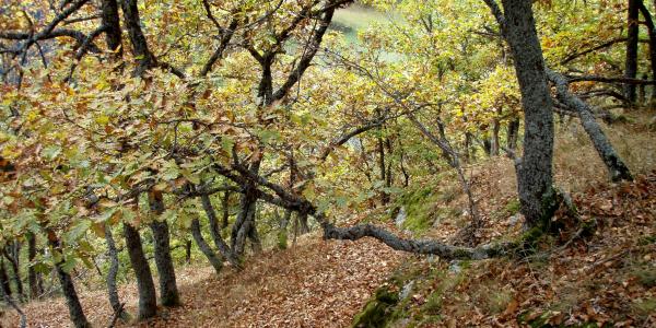 Eichenwäldchen Tschuppina