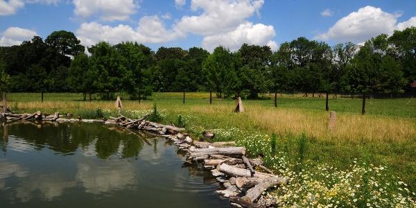 Vizes élőhely a Körösvölgyi Állatparkban