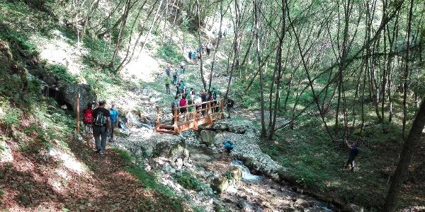 "Der Wanderweg ""del Berghem"" im Wald"