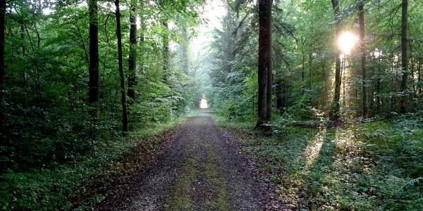 "0100 Im ersten Waldabschnitt ab Lenzburg  47°24'19.9""N 8°09'40.3""E"