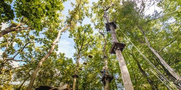 Klettern in den Baumkronen des Bienwaldes