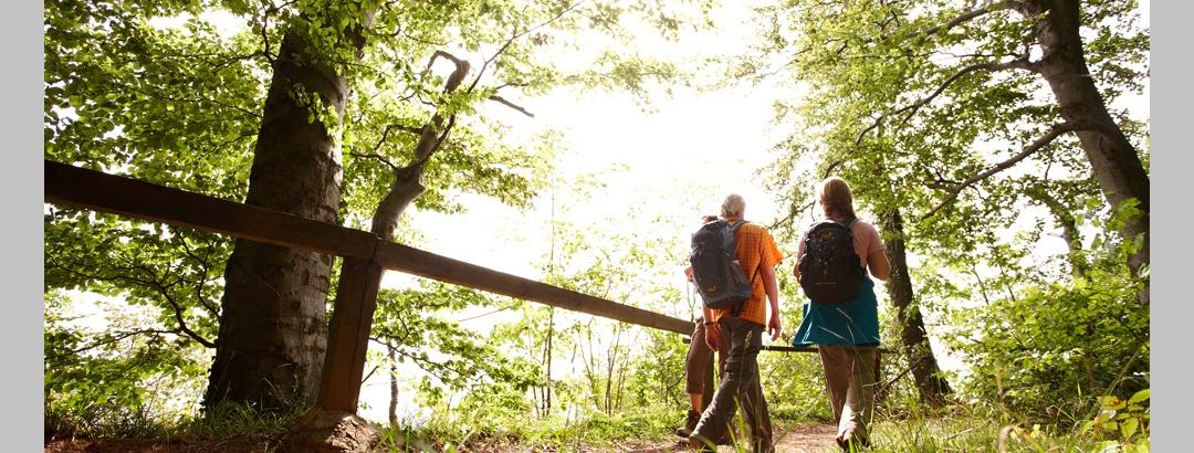 Wanderer im Wald auf dem Weserbergland-Weg