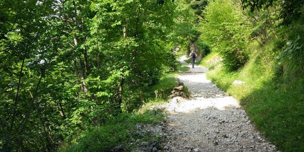 Il sentiero all'inizio del percorso. Facile ed adatto a tutti.