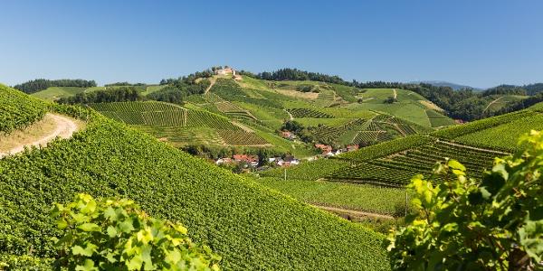 Sommerlicher Blick aus dem Sendelbach auf Schloss Staufenberg