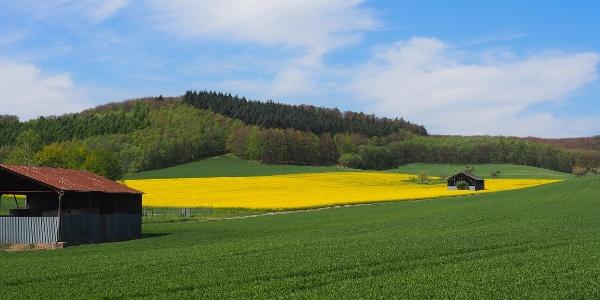 Ausblick Mittelsberg Eich