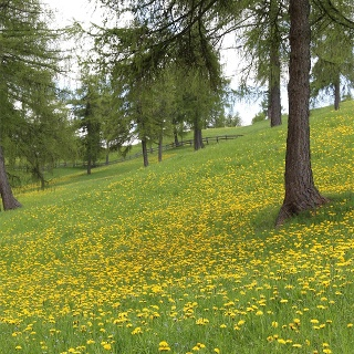Natur Tschöggelberg