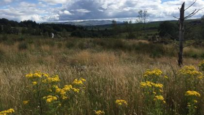 Country Road en route to Aberfoyle