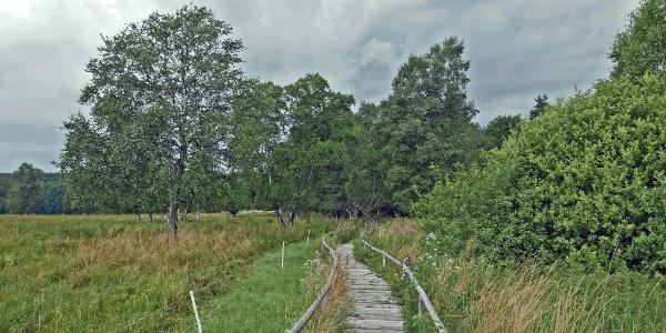 Im Schopflocher Moor