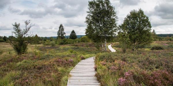 Weitgehend auf Stegen führt der Weg durch das Moor