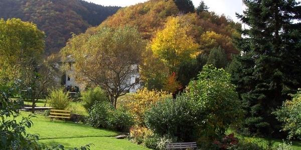 Natur rund um´s Haus am Ehrbach