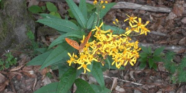 Flora auf dem Wanderweg