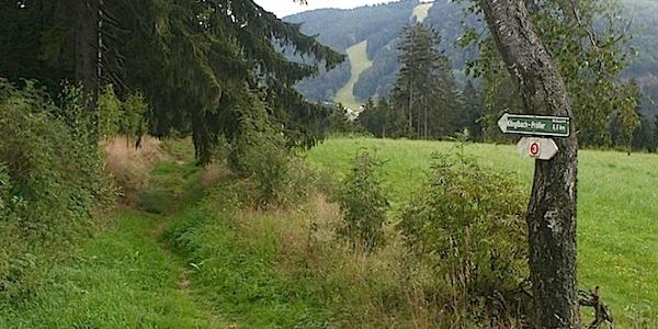 Abzweigung am Waldrand in Maibrunn nach Klinglbach