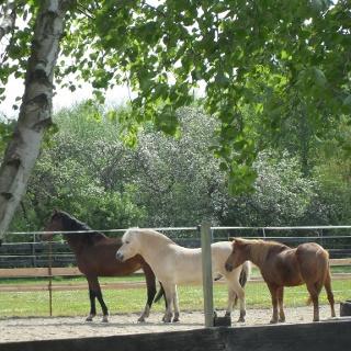 Pferdeweide in Westoverledingen