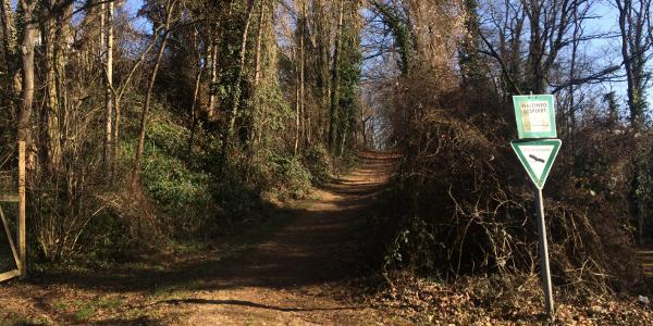 Ein recht unbekanntes Waldstück, am Finkenberg