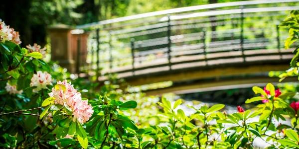 Kurpark Brücke