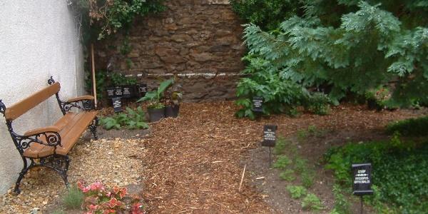 Gyógy- és fűszernövénykert a várban