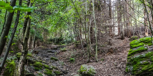 A zöld jelzés legvadregényesebb, kősziklás, patakmosásos szakasza