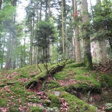 Im Wald irgendwo auf dieser Tour