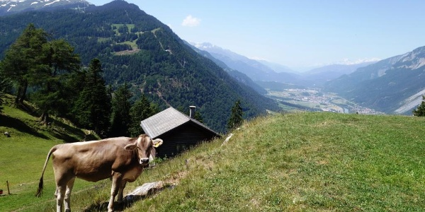 Mittenberg mit Blick ins Churer Rheintal