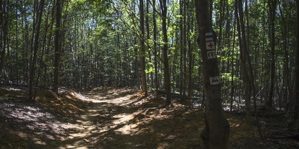 A Martalóc sűrű erdői még verőfényes napsütésben is sötétek