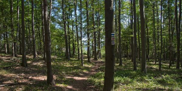 A kilátóhelyhez vezető 50m hosszú ösvény