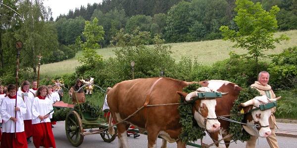 Ochsenwagen mit Engelmarwagen