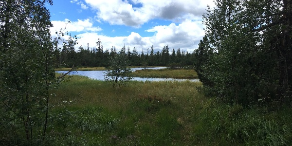 Hohlohsee im Hochmoor bei Kaltenbronn
