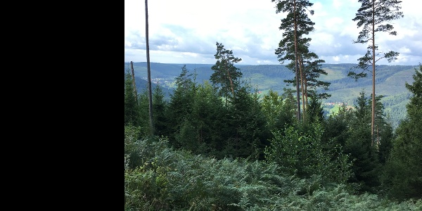 Aussicht Murgtal Ruine Königswart