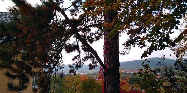 Blick vom Beutenberg Richtung Osten