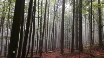 Mystischer Wald am Mösenberg