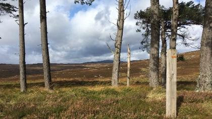 Orange Glen Tilt trail marker