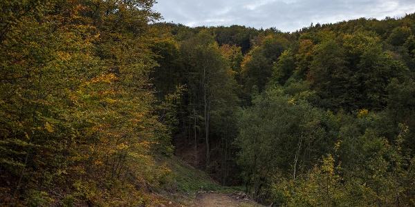A Werbőczy-forráshoz vezető út