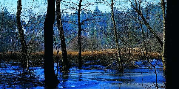 Das Büsselimoos oberhalb Bremgarten