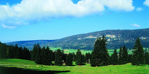 Auf dem Montoz. Inbegriff einer Jura-Landschaft