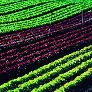 Mitten durch den  «Gemüsegarten» der Schweiz